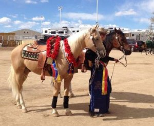 Cori Vokum wins at 2013 Scottsdale Arabian Show